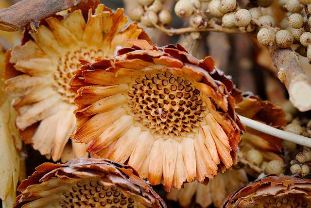 Nature, Food, Close Up, Plant, Color, Summer, Flower