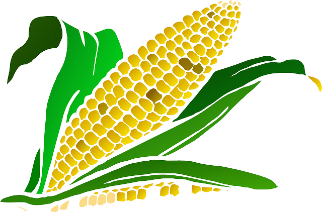 Corn, Food, Maize, Plant, Agriculture, Crop