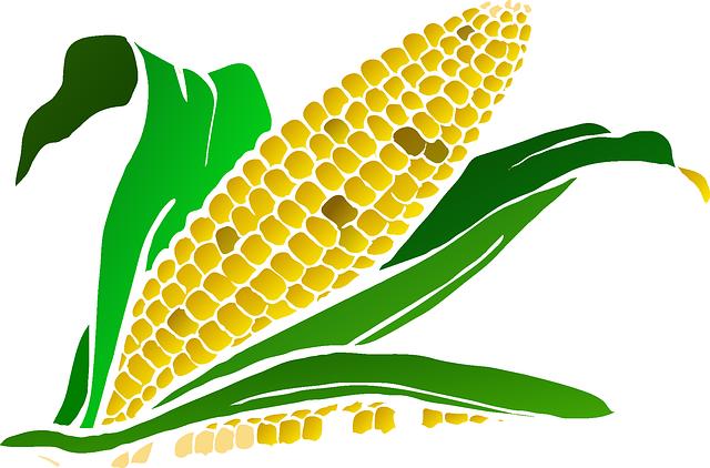 Corn, Food, Maize, Plant, Agriculture, Crop