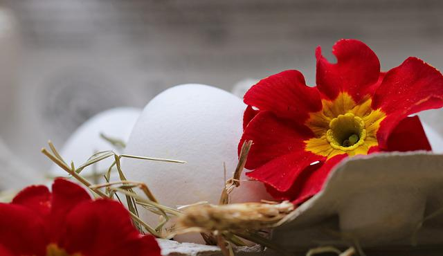 Egg, Straw, Flower, Blossom, Bloom, Food, Eat, Healthy