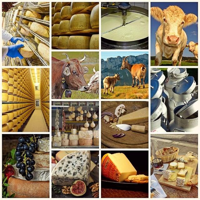 Collage, Cheese, Milk Product, Food, Eat, Käseplatte