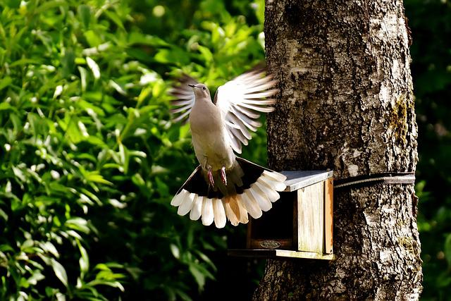 Dove, Bird, Food, Birds, Feather, Animal, Nature