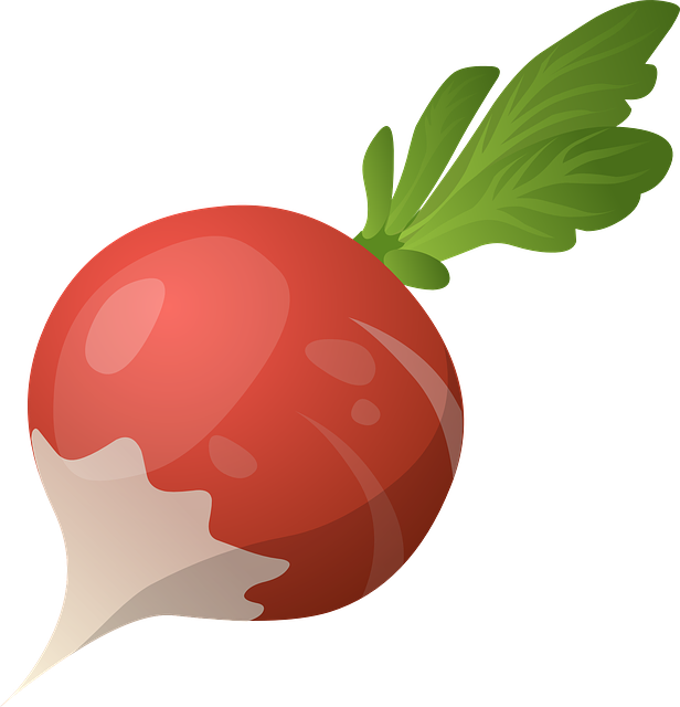 Radish, Vegetable, Raw, Fresh, Food, Organic, Healthy