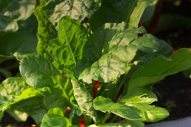Chard, Leaves, Vegetables, Leaf Veins, Food, Vitamins