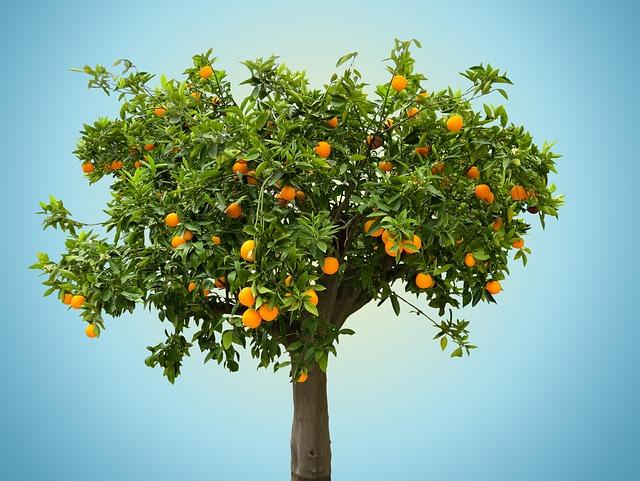 Nature, Tree, Orange, Orange Tree, Fruit, Vitamin, Food