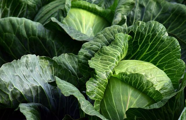 White Cabbage, Herb, Food, Kohl, Vegetables