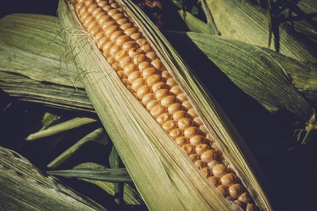 Sweet Corn, Vegetables, Food, Corn Kernels, Bio, Yellow
