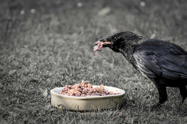 Raven Bird, Crows Bird, Eat, Nature, Feather, Foraging
