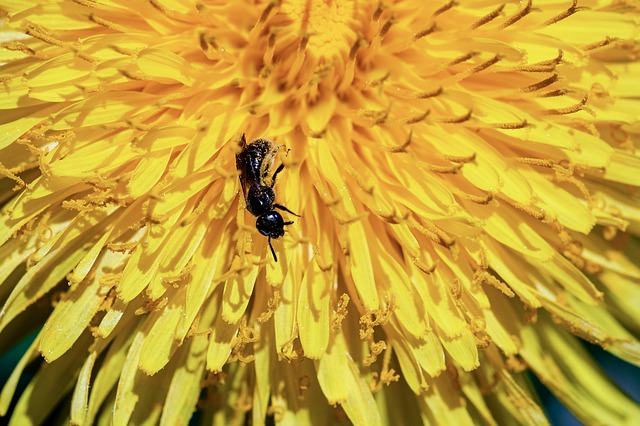 Ant, Black Ant, Formicidae, Insect, Foraging, Tiny