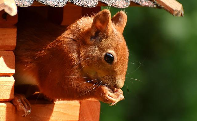 Squirrel, Cute, Animal, Nager, Nature, Garden, Foraging