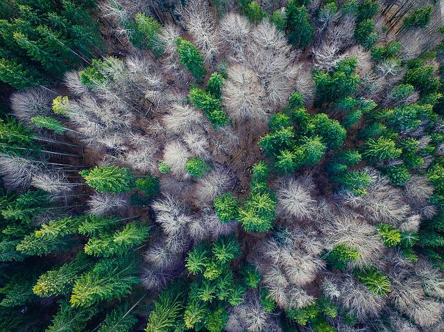 Aerial View, Forest, Top, Forests, From Above
