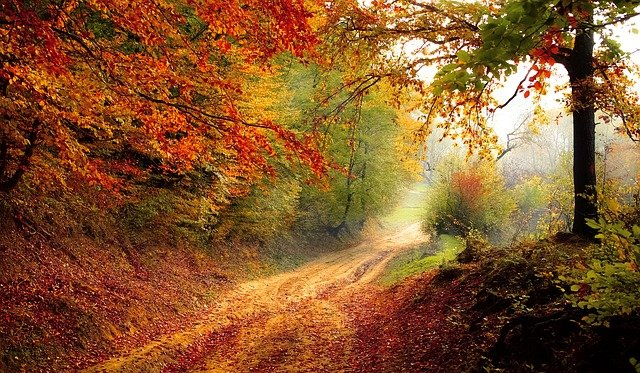Road, Forest, Season, Autumn, Fall, Landscape, Nature