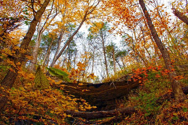 Outdoor, Forest, Foliage, Park, Green, Gold, Autumn