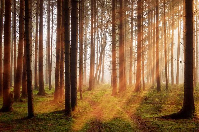 Forest, Trees, Sunbeam, Autumn, Landscape, Nature