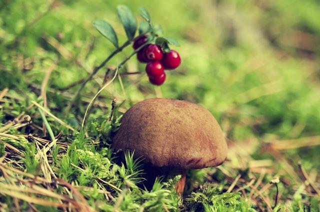 Forest, Chestnut Boletus, Mushroom, Autumn