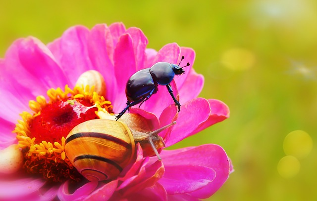 Forest Beetle, The Beetle, Molluscs, Snail, Flower