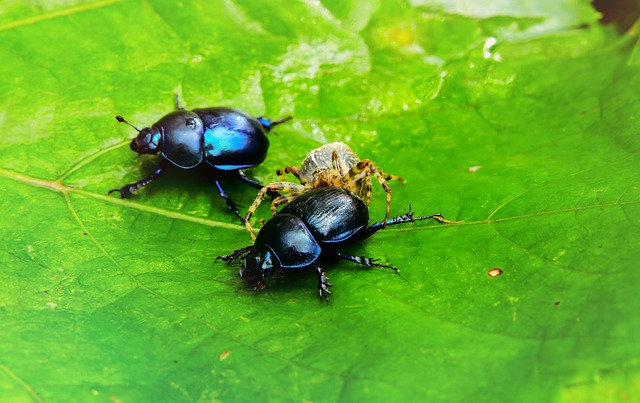 Forest Beetle, Insects, The Beetles, Arachnids, Leaf