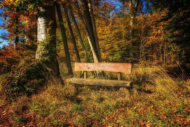 Bank, Forest, Nature, Rest, Silent, Autumn, Bench