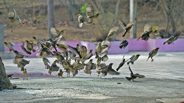 Home, Sparrow, Bharat, Bird, Natural, Forest, Wildlife