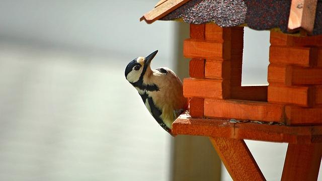 Woodpecker, Bird, Animal, Forest Bird, Forest