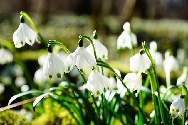 Snowflake, Flower, Blossom, Bloom, White, Forest