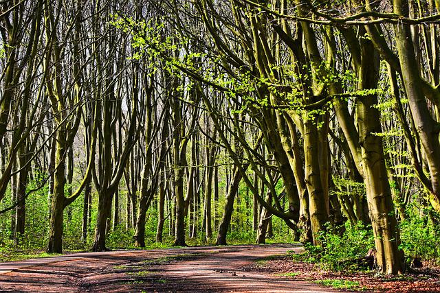 Forest, Tree, Lane, Tree Lined Lane, Trunk, Branches