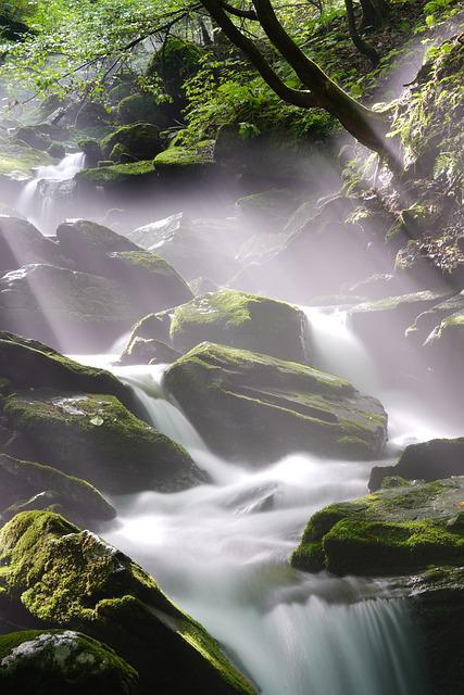 Brook, Water, Clean, Mountain, Forest, Travel, Moss