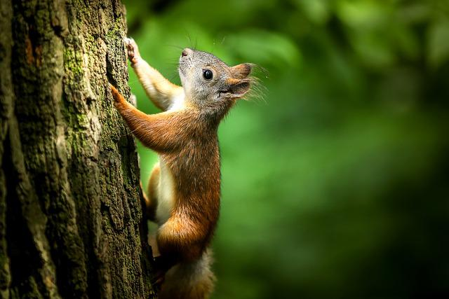 Squirrel, Forest, Rodent, Tree, Park, Stroll, Closeup