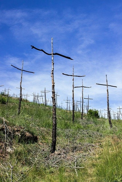 Fire, Cruz, Forest, Desolation