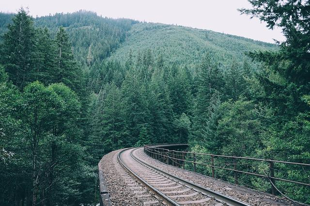 Curve, Daylight, Forest, Green, Guidance, Mountain