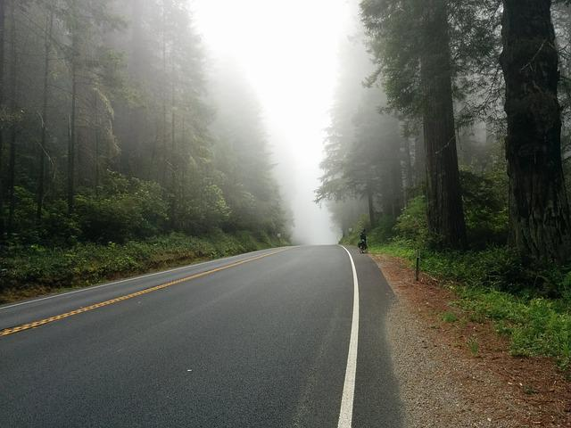 Asphalt, Drive, Fog, Foggy, Foliage, Forest, Highway