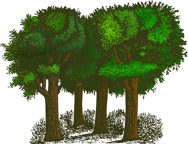 Forest, Trees, Plants, Ecology, Environment, Green