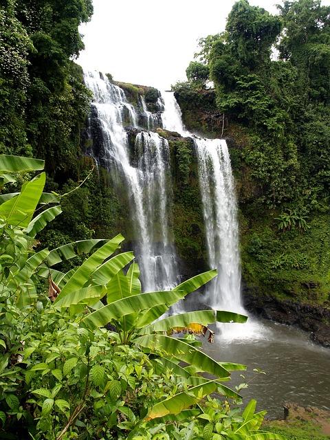 Waterfall, Falla, Cascades, Water, Jungle, Forest