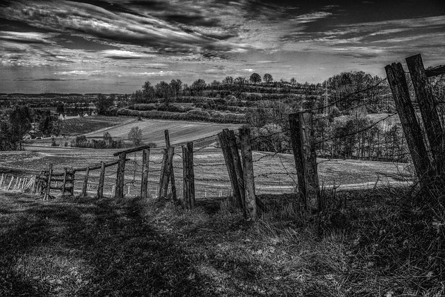 Fence, Landscape, Away, Nature, Sky, Forest