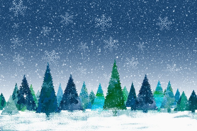 Christmas, Winter, Fir Tree, Forest, Snow, Cold