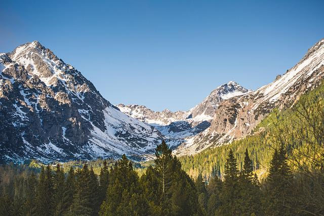 Daylight, Fir Trees, Forest, Glacier, Green, High, Ice