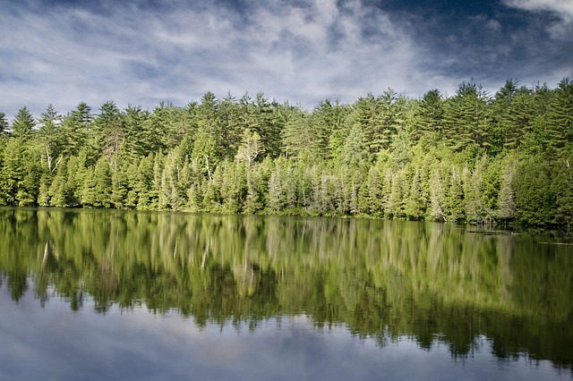 Lake, Trees, Nature, Woods, Forest, Fir, Water