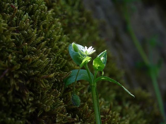Moss, Flower, Macro, Forest, Plant, Green