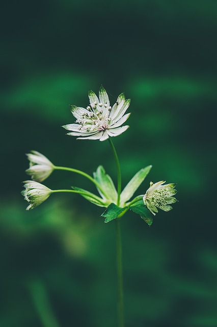 Flower, Forest Flower, Pointed Flower, Nature, Plant