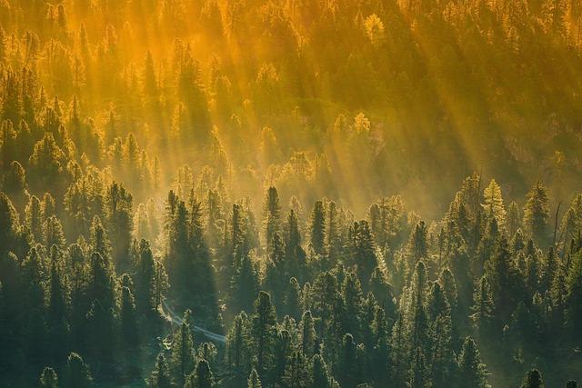 Forest, Trees, Sunset, Dawn, Nature, Landscape, Fog