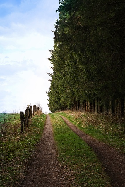 Away, Forest, Field, Fence, Forest Path, Lane