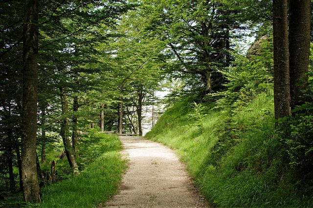 Trail, Away, Nature, Forest, Trees, Hiking, Forest Path