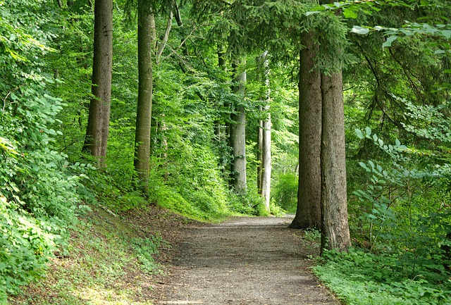 Away, Forest, Forest Path, Nature, Trees, Trail