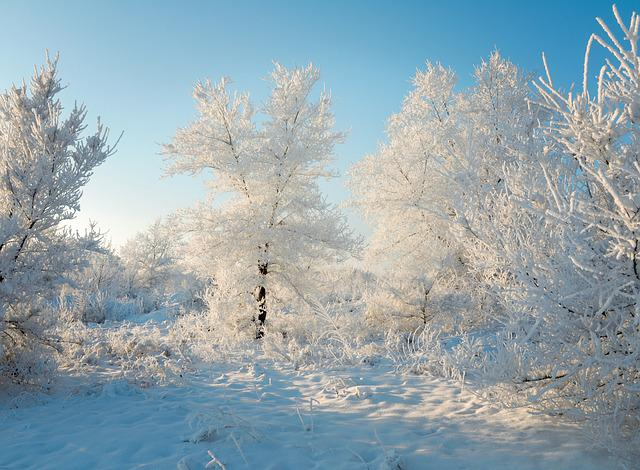 Winter, Snow, Forest, Nature, Trees, Frost, December