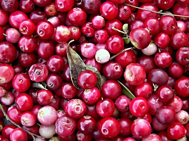Cranberries, Black Berry, Forest Fruit, Harvest
