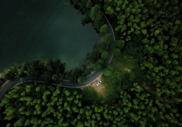 Forest, Road, Trees, Car, Green, Lake, Water