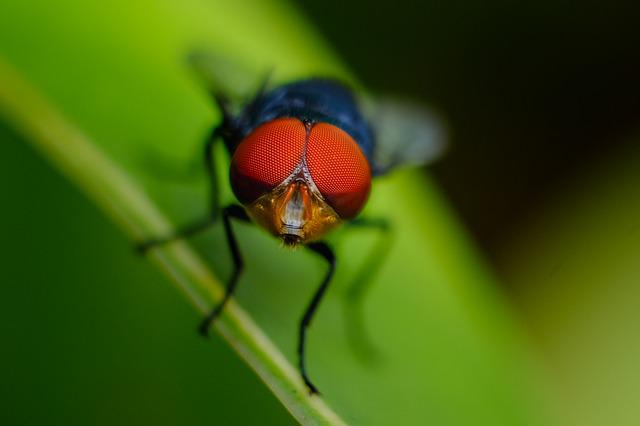 Fly, Red, Green, Natural, Forest