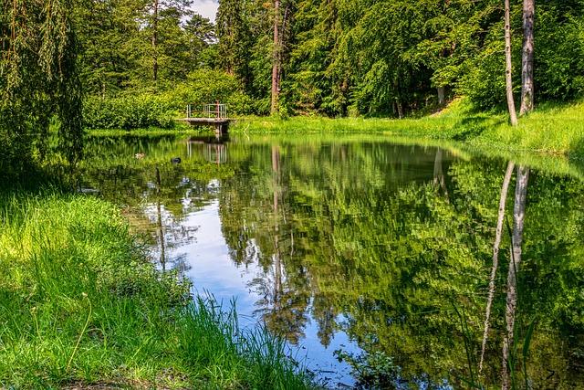 Waldsee, Forest, Lake, Pond, Nature, Landscape, Green