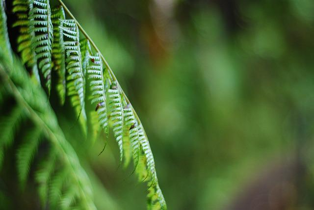 Greenery, Fern, Background, Forest