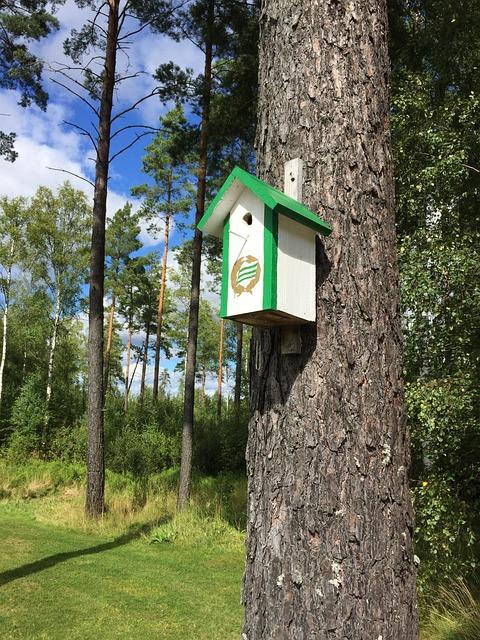 Forest, Tree, Birdhouse, Hammarby